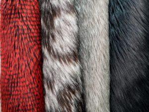 Silver Rojo, Sabana Fox, Silver tip y Racoon Negro