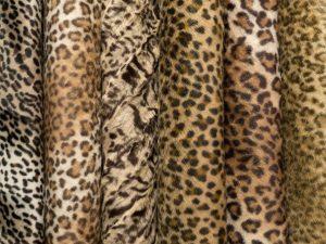 Cheeta Marron, Gato Pantanal, Wild Cat, Jaguar, Gato Montes y Uzkur